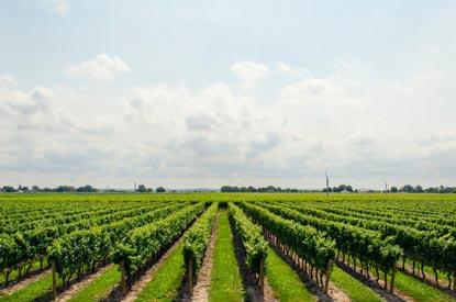 La agricultura ahora está en la nube