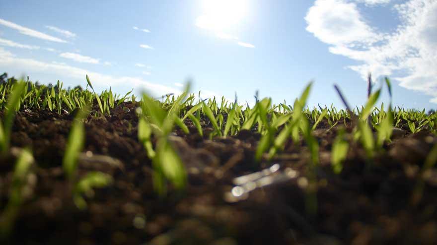 La agricultura renace y la economía se beneficia